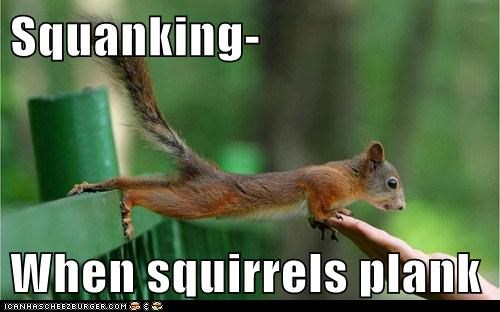 Squanking- When squirrels plank