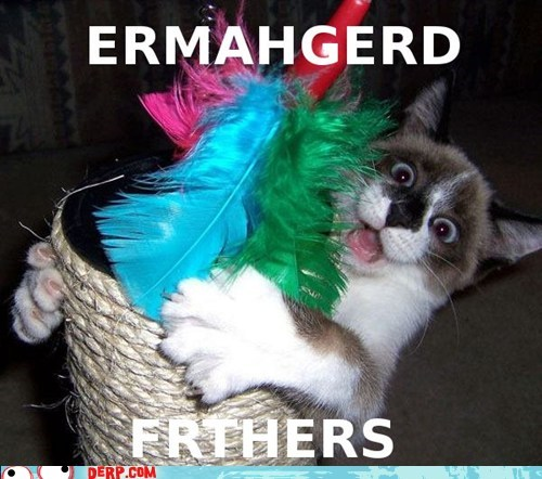 best of week cat colorful derp Ermahgerd feathers