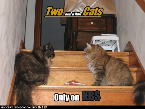 Two Cats and a half KBS Only on