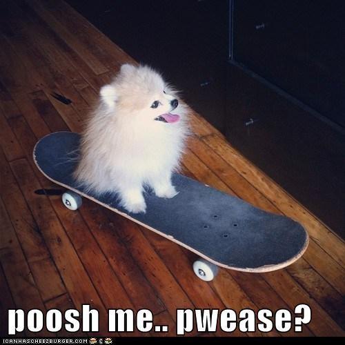 dogs pomeranian push skateboard