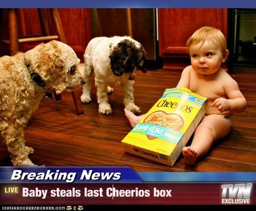 Cheezburger Image 6419334656