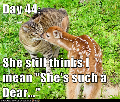 cat,confused,dear,deer,fruitless,report,training