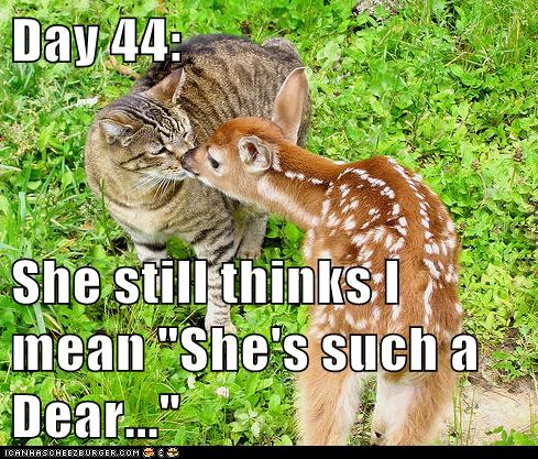 cat confused dear deer fruitless report training - 6419372800