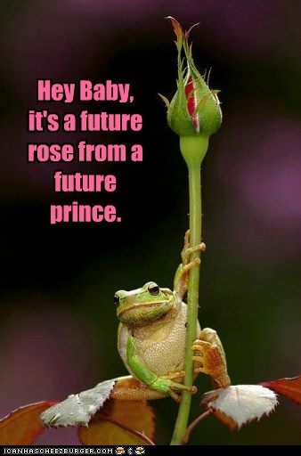 captions frog future gift hey baby pickup lines prince rose - 6419400960