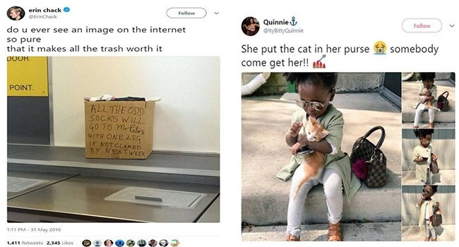 wholesome pic of child with kitten in her purse and box of lost socks