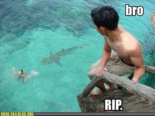 Death r-i-p shark swimming