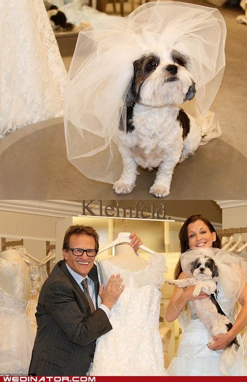 dogs expensive funny wedding photos guinness book of world re wedding - 6419767552
