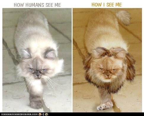 Cats fierce lions perception vs - 6420234496