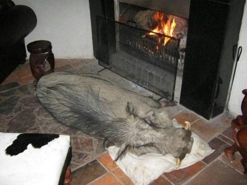 adorable animal being ado adorable warthog pumbaa - 6420559104