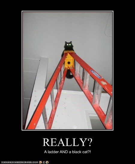 REALLY? A ladder AND a black cat?!
