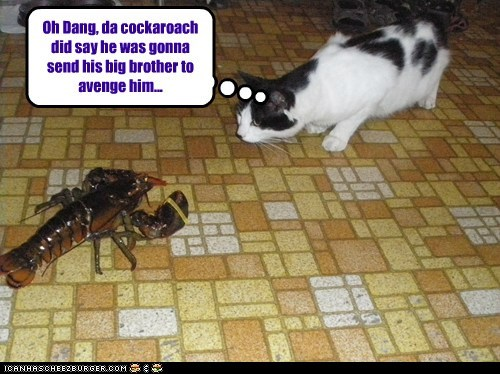 attack,avenge,big brother,cat,cockroach,fight,lobster,trouble