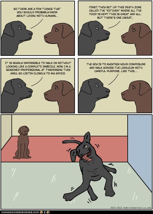 comics derp derping dogs floors illustrations kitchens slipper - 6420696576