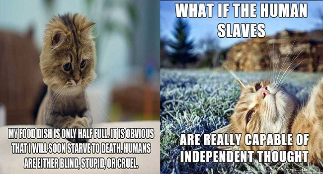 funny cat thoughts