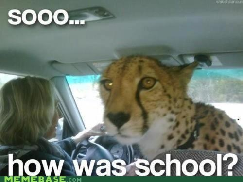 animals,cheetah,front seat,jaguar,Memes,school