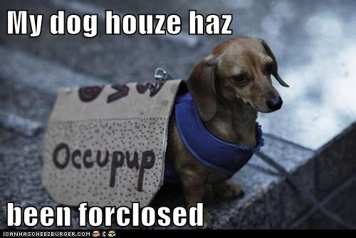 dogs occupy wallstreet political pictures - 6421767680
