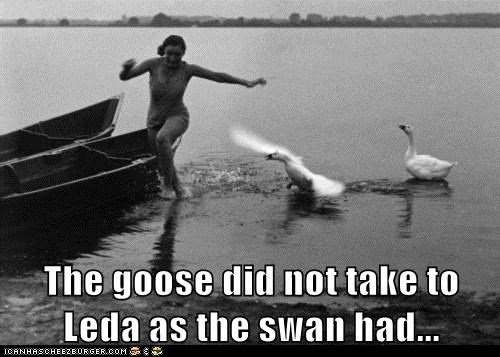 The goose did not take to Leda as the swan had...