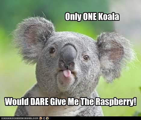 dare koala lonestar quote raspberry spaceballs tongue - 6422152960