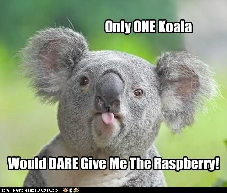 dare koala quote raspberry tongue - 6422152960