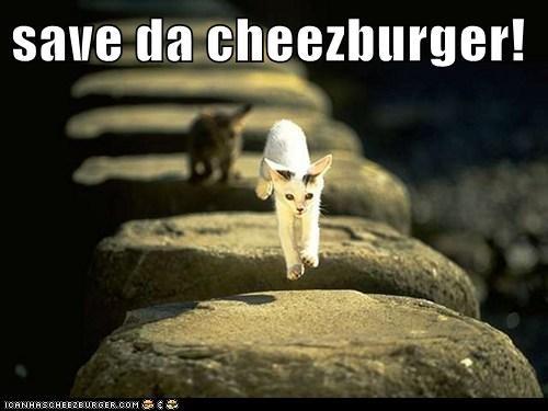 Cheezburger Image 6422275072
