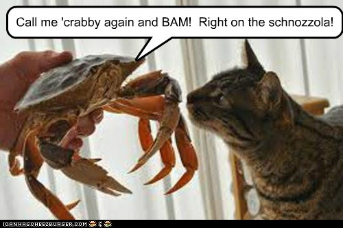 angry bam cat claws crab crabby pinching threat