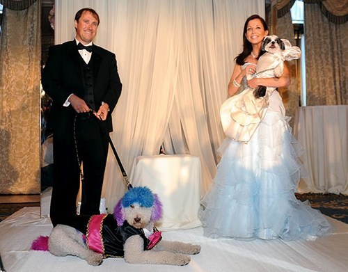 canine wedding,humane society of new yor,humane society of new york,most expensive pet weddin,most expensive pet wedding,the rich get sillier