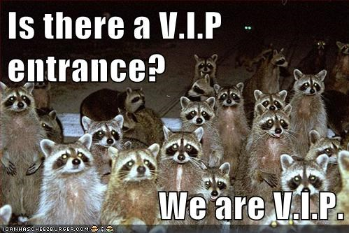 entrance,group,raccoon,snob,VIP