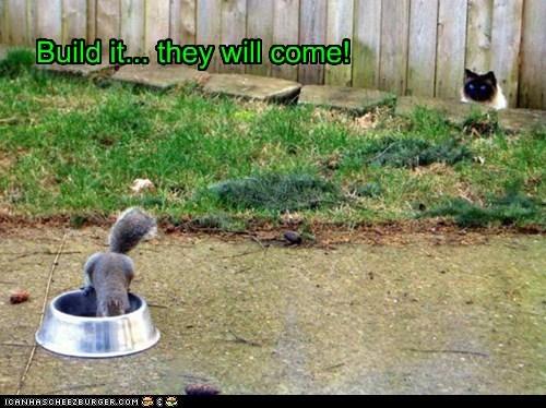 build it cat field of dreams squirrel stalking trap - 6422677504