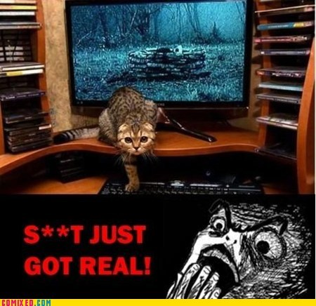 best of week,cat,computer,From the Movies,kitty,Movie,the ring