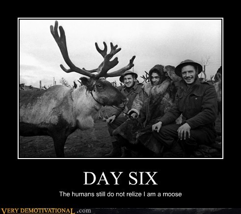 DAY SIX The humans still do not relize I am a moose