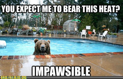 bear,Heat,pool,pun,swimming