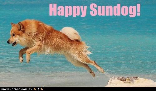 beach happy sundog jumping ocean Sundog what breed - 6423010816