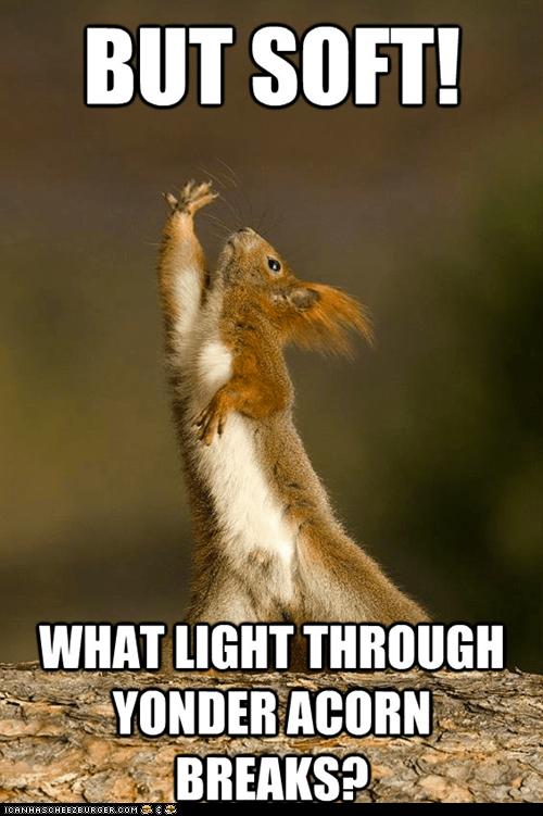 acorns captions is it a meme shakespeare shakespeare squirrel squirrels - 6423114496