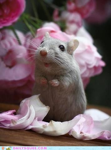 flowers gift mouse noms petals squee - 6423154944