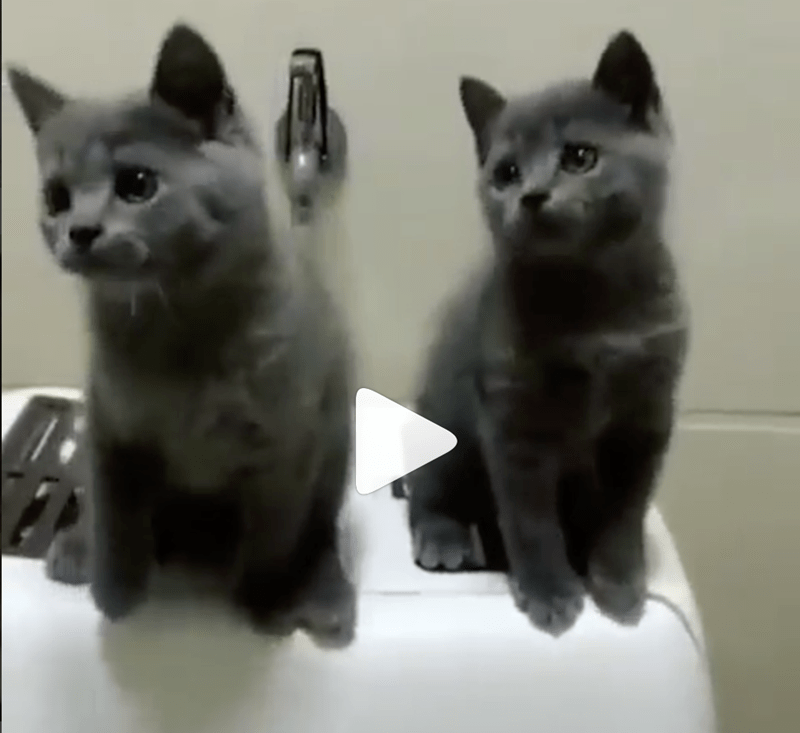 lolcats hilarious lolz adorable videos instagram cute cute cats lol funny cats funny - 6423301