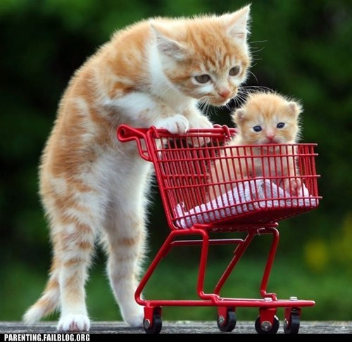 Cats,kitten,shopping cart