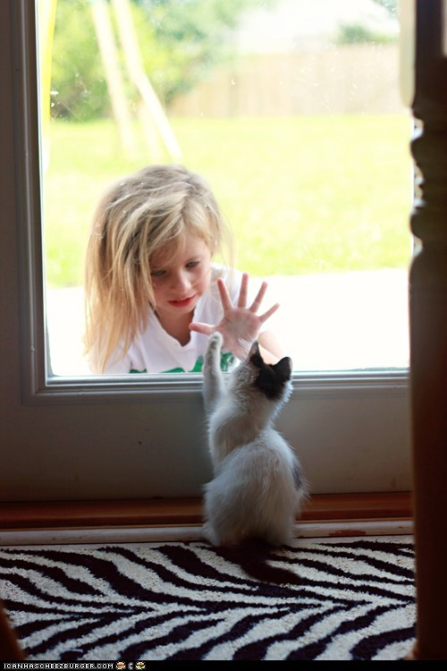Cats,children,cyoot kitteh of teh day,doors,hands,high fives,humans,kitten,windows