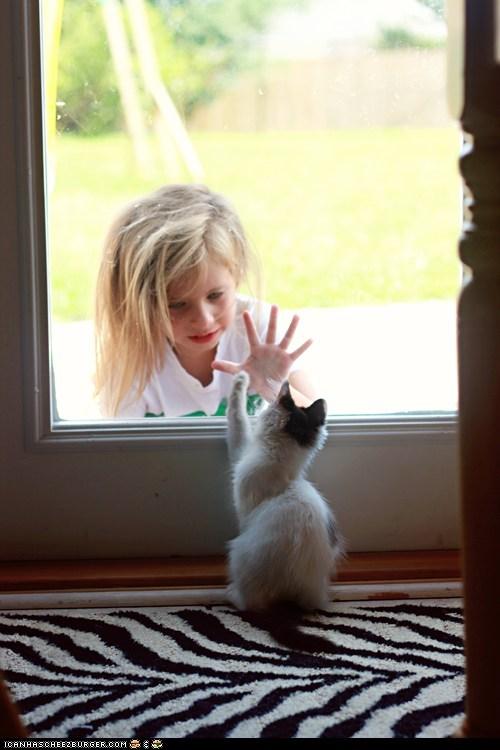 Cats children cyoot kitteh of teh day doors hands high fives humans kitten windows - 6423969536