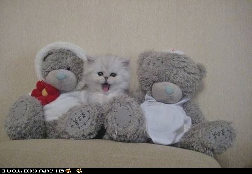 blending in,Cats,cyoot kitteh of teh day,gray,kitten,stuffed animals,teddy bears