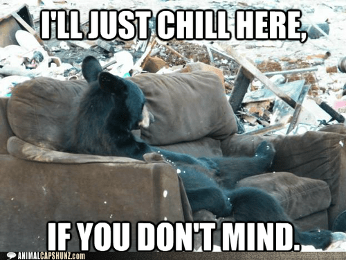 bear chilling couch crashing dont-mind garbage Party - 6424193792