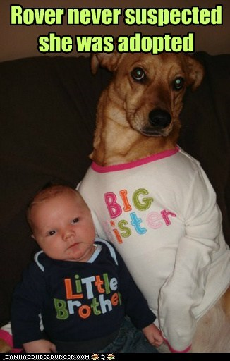 adopted baby big baby dogs what breed