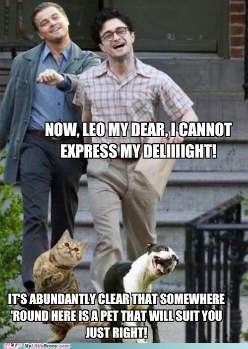 may the best pet win meme photoshop strutting leo - 6424804352