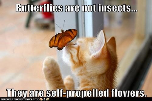 butterfly,captions,Cats,Flower,fly,insect,move,nose,pretty