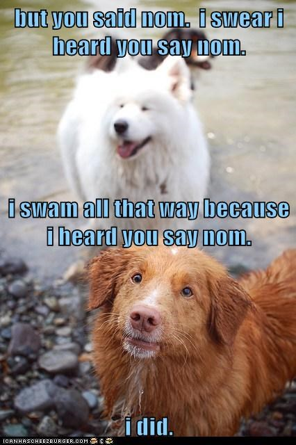 dogs,nom,smile,wet,what breed,you said