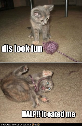 captions,Cats,danger,eat,fun,play,string,yarn