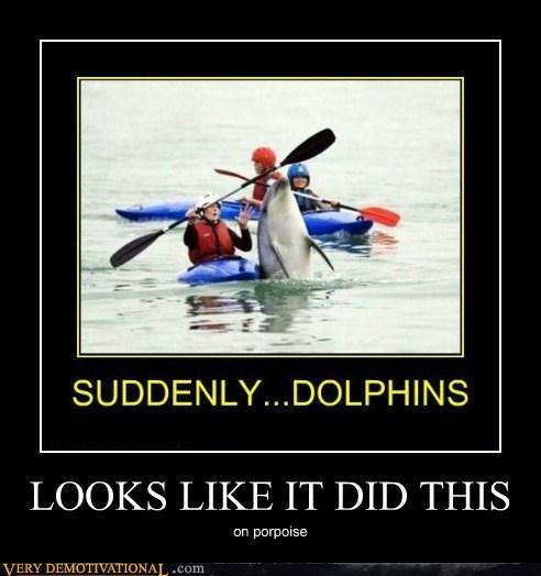 dolphin hilarious jerk porpoise - 6425777920