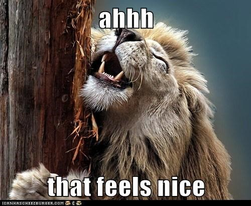 best ever captions feels good happy lion scratching smile tree - 6425914112