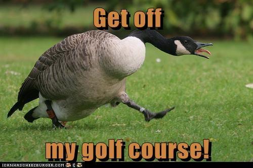 charging get off goose - 6426047232