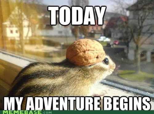 adventure,chipmunk,helmet,Memes,safety