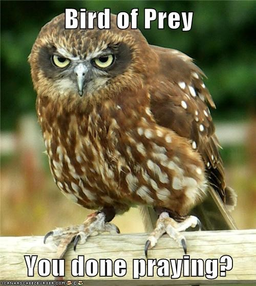bird of prey,fight,Owl,praying,scary,stare down,threatening