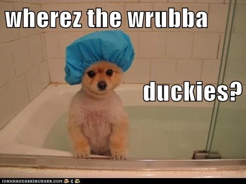 bath,captions,dogs,dremel tool,pomeranian,rubber ducky,shower cap